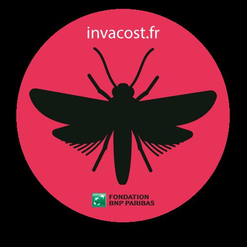 Insectes envahissants